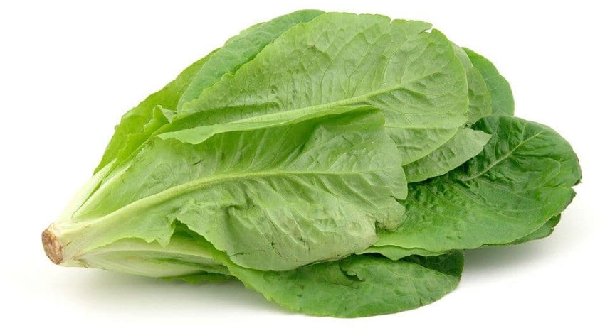 Lettuce for Weight Loss