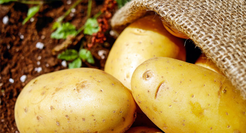 Potatoes are healthier and good for weight loss