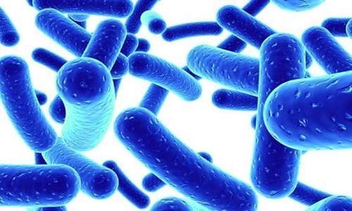 Image result for Lactobacillus Acidophilus