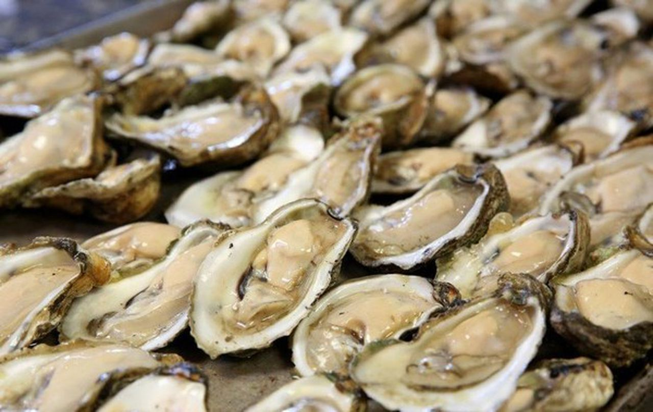 food poisoning from oysters